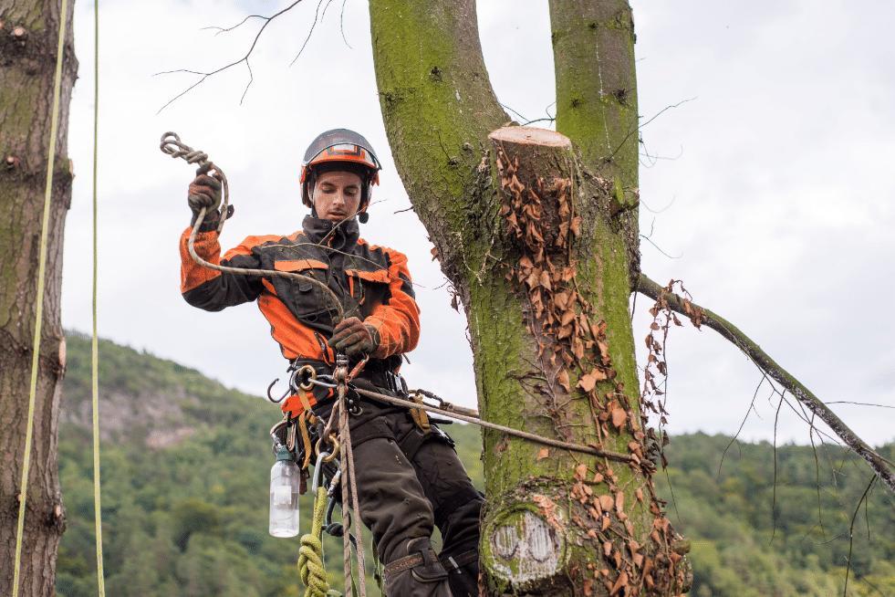 Tree Service Montgomery AL - Arborist in tree