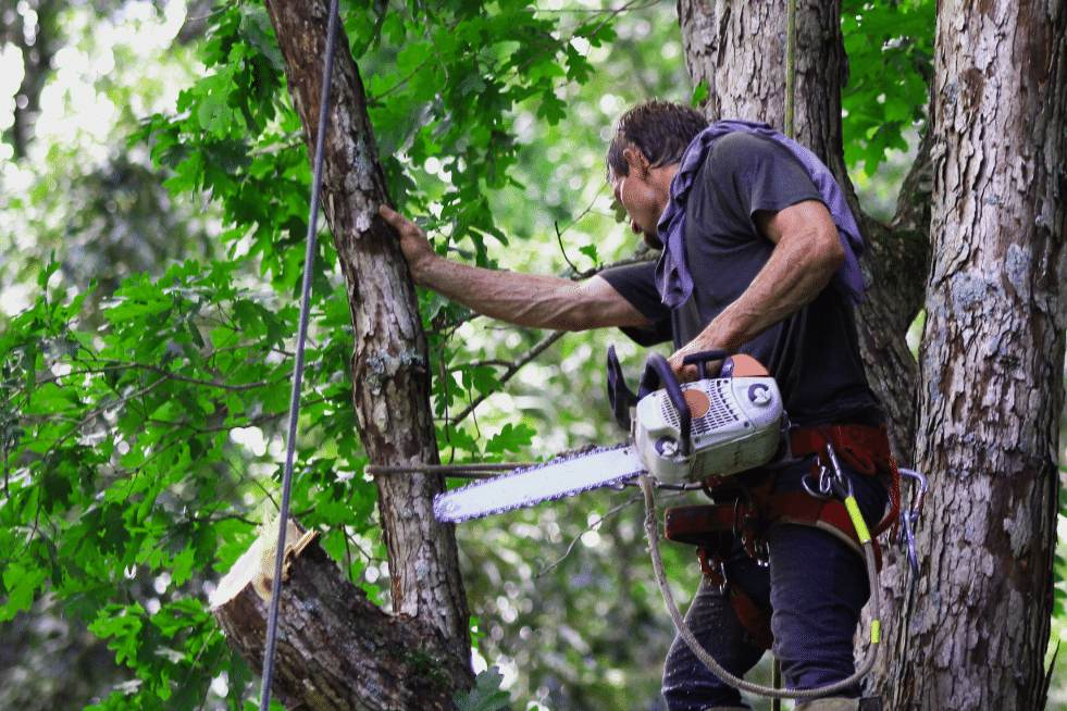 Tree Service Montgomery Alabama - Arborist trimming a tree