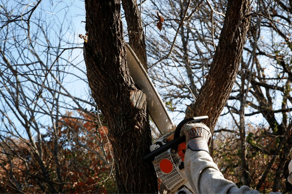 Tree Service Montgomery AL - Trimming tree with chainsaw