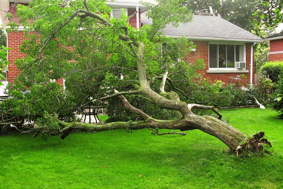 Tree Service Montgomery AL - Emergency Tree Service