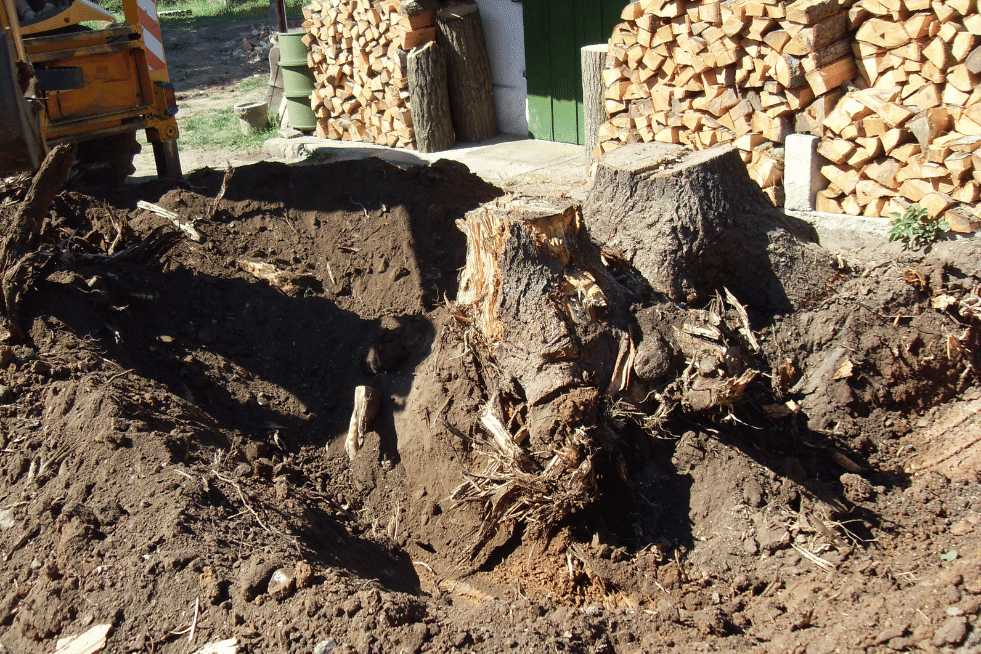 Tree Service Montgomery AL - Stump Removal