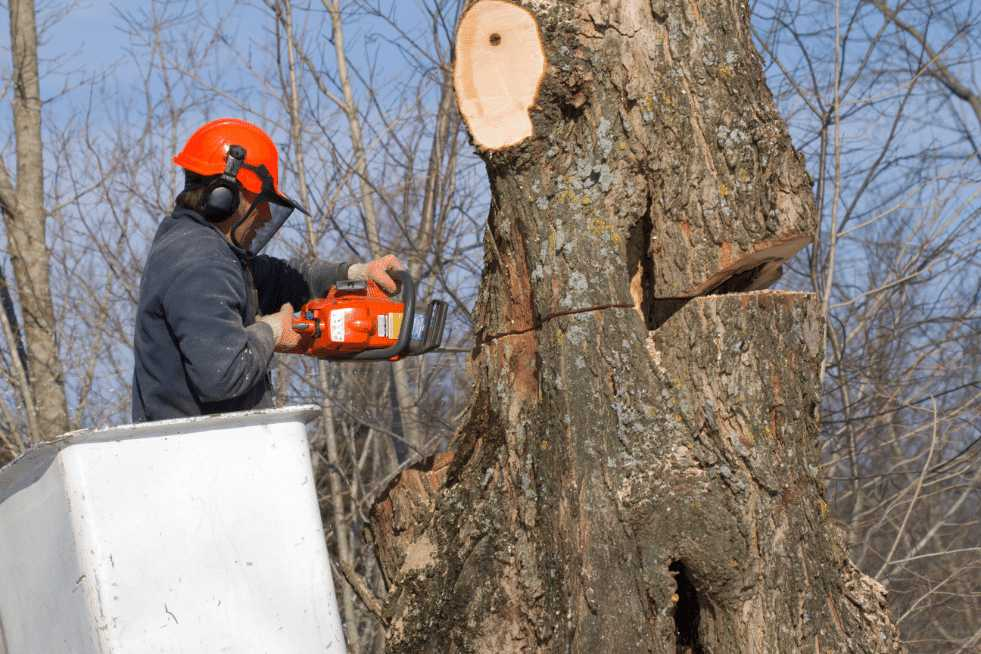 Tree Service Montgomery AL - Tree Removal