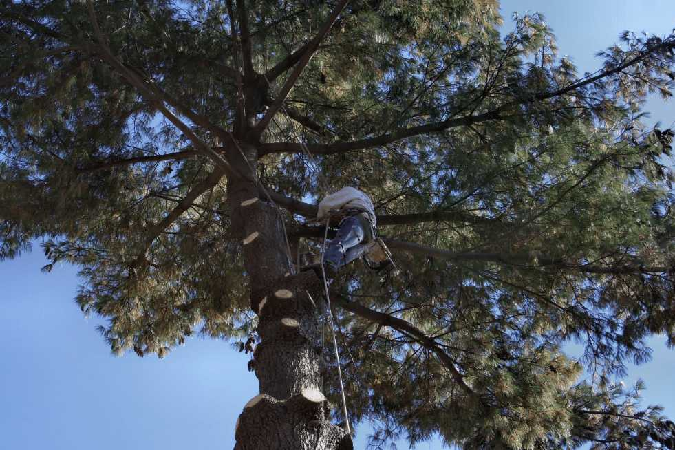 Tree Service Montgomery AL - Tree Trimming & Pruning
